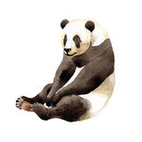 Wildes Tier des Pandas in einer Aquarellart lokalisiert stock abbildung
