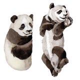 Wildes Tier des Pandas in einer Aquarellart lokalisiert lizenzfreie abbildung