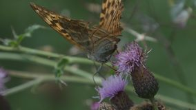 Wildes tierisches schönes farbiges Schmetterlings-Bild in der Natur stockfotos
