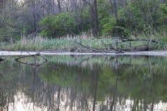 Wildes unberührtes Seeufer in im Frühjahr glätten Stockfotos