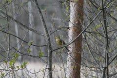 Wildes Vogelleben Stockbilder