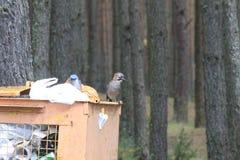 Wildes Vogelleben Lizenzfreie Stockbilder