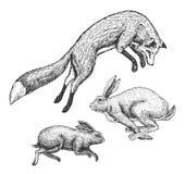 Wildes Waldtier, das oben springt Ansteigender roter Fuchs und Hasen und Kaninchen Nahrungsmittelsuchkonzept Abbildung der roten  vektor abbildung