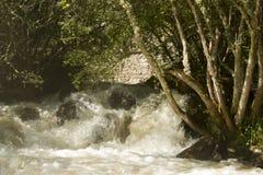 Wildes Wasser Lizenzfreie Stockfotos