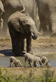 Wildestes Afrika lizenzfreie stockfotografie