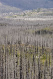 """Wildfire †""""Gebrande bomen in bos in de V.S. Royalty-vrije Stock Foto's"""