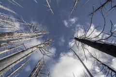 """Wildfire †""""Gebrande bomen in bos in de V.S. Royalty-vrije Stock Fotografie"""