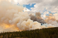 Wildfire. Antelope Creek wildfire rages through Yellowstone Park, 2010 stock image