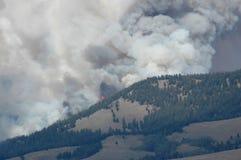 Wildfire Stock Afbeelding