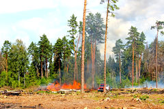 Wildfire. Forest fires in Russia near Moscow Royalty Free Stock Photos