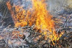Wildfire Royalty-vrije Stock Foto