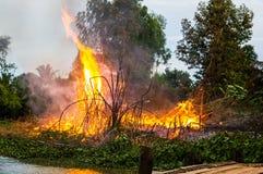 wildfire Стоковое Изображение RF