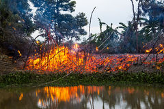 wildfire Стоковые Изображения
