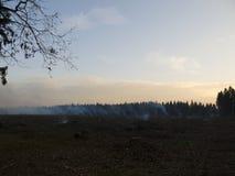 wildfire Image libre de droits
