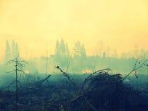 wildfire Photo stock
