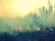 wildfire Photos libres de droits