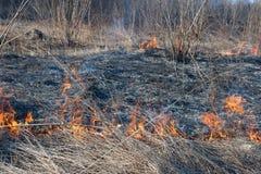 wildfire Fotografia Stock