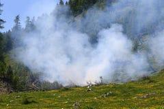 wildfire Imagens de Stock