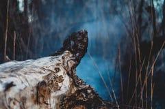 wildfire stockfoto