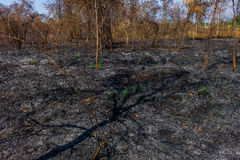 wildfire lizenzfreie stockbilder