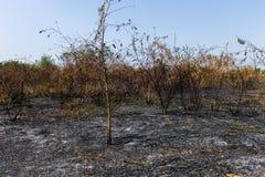 wildfire stockbilder