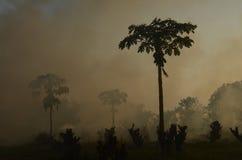 wildfire lizenzfreies stockbild