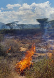 Wildfire in African savanna Stock Images
