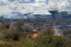 Wildfire in African savanna Stock Photos