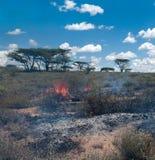 Wildfire in African savanna. Kenya Royalty Free Stock Photo