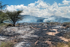 Wildfire in African savanna Royalty Free Stock Photos