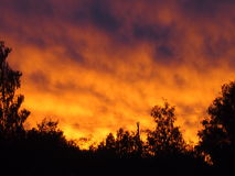Wildfire. Blazes in night lighting up crimson light the sky royalty free stock photography