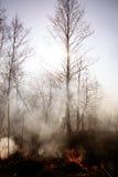 wildfire Brand Het globale verwarmen, milieucatastrofe Conce Royalty-vrije Stock Foto