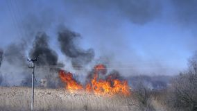 Wildfire, bright blaze in forest and lot black smoke against blue sky. By day stock footage
