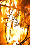 Wildfire burning. With large flames royalty free stock photography