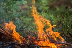 Wildfire burning. With large flames stock images