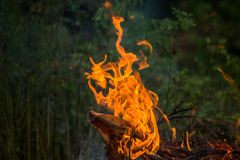 Wildfire burning. With large flames stock photos