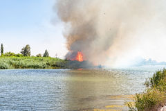 Wildfire burning in reeds next to the Riet River Stock Photography