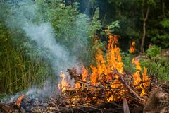 Wildfire burning. With large flames stock image