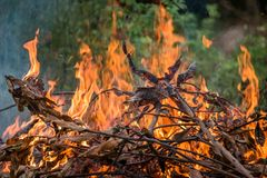 Wildfire burning. With large flames stock photography