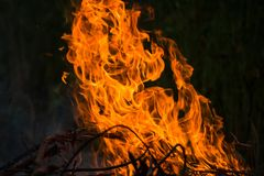 Wildfire burning. With large flames royalty free stock image