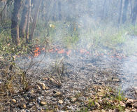 Wildfire  in Chitwan, Nepal Stock Images