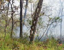 Wildfire  in Chitwan, Nepal Royalty Free Stock Images