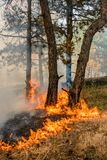 Wildfire close up at day time. Forest fire burning, Wildfire close up at day time Royalty Free Stock Image