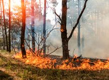 Wildfire close up at day time. Forest fire burning, Wildfire close up at day time Royalty Free Stock Photo