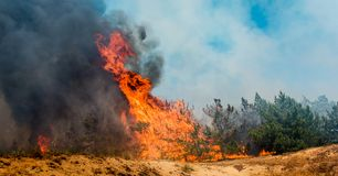 Wildfire close up at day time. Forest fire burning, Wildfire close up at day time Stock Images