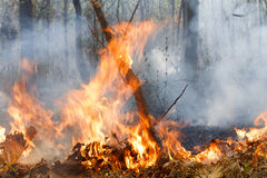 Wildfire Royalty Free Stock Photo