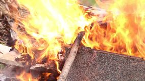 Wildfire. Fire Burns with moving flames and smoke stock video footage