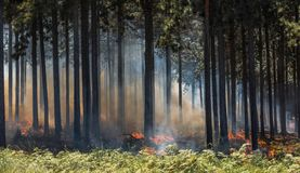 Wildfire, fire in a forest stock images