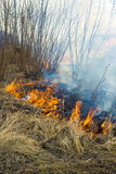 Wildfire, fire in the forest Stock Images