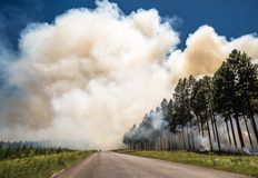 Wildfire, fire in a forest stock photo